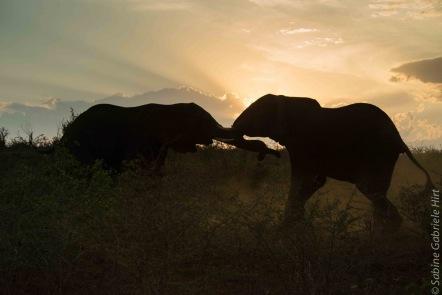 elephant (22 of 22)
