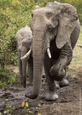 elephant (3 of 22)