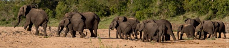 elephant (4 of 22)