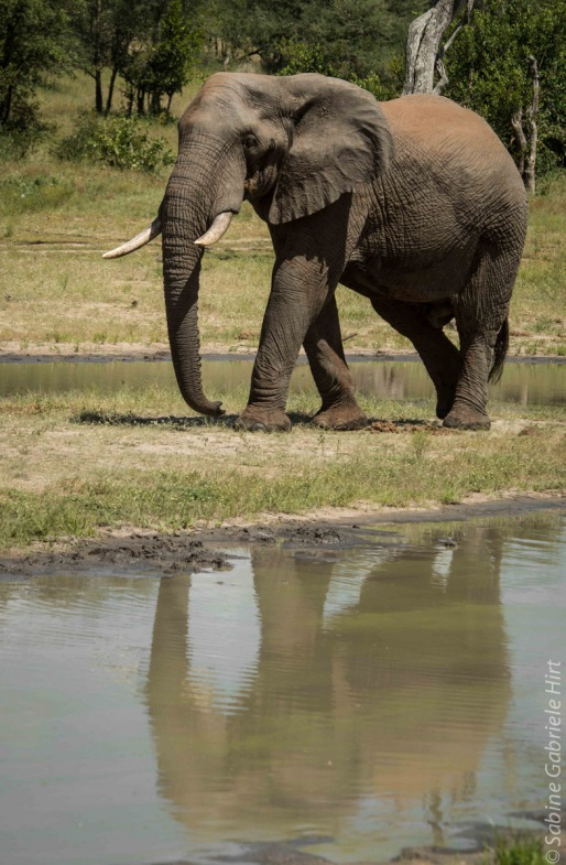 elephant (5 of 22)