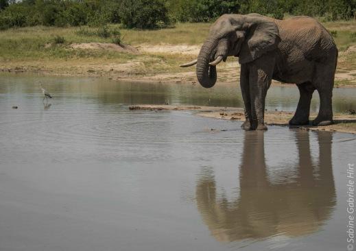 elephant (6 of 22)