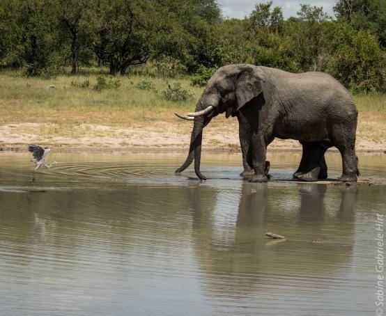 elephant (7 of 22)