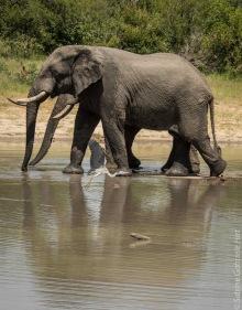 elephant (8 of 22)