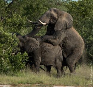 elephant (9 of 22)