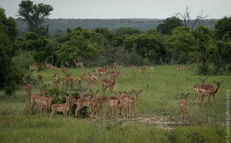 impala (4 of 18)