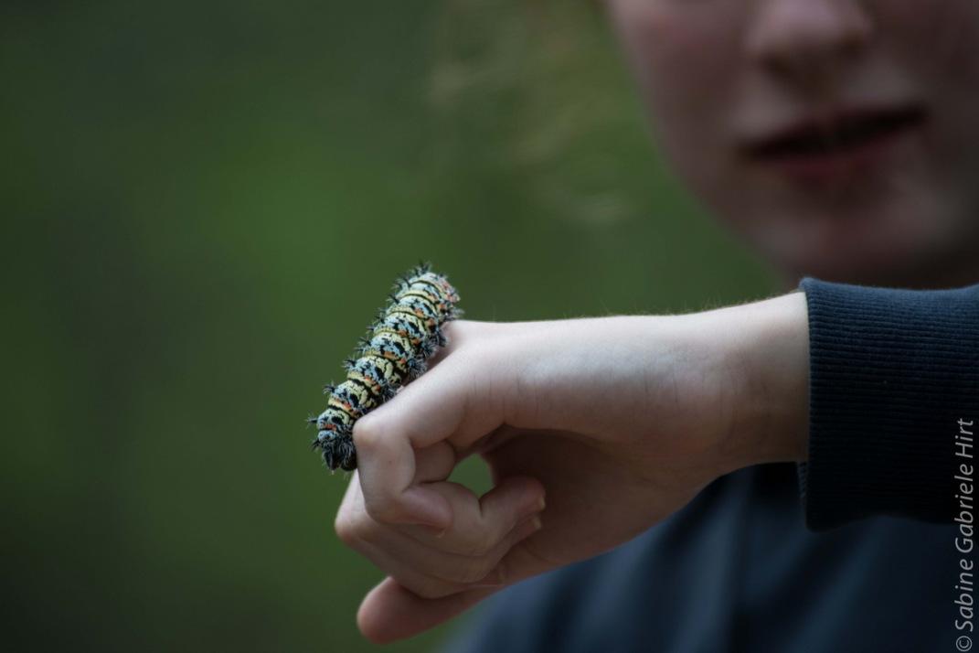 mopani worm (1 of 1)
