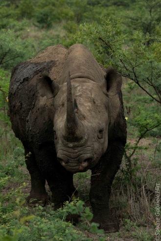 rhino (10 of 10)