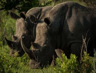 rhino (2 of 10)