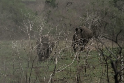 rhino (3 of 10)