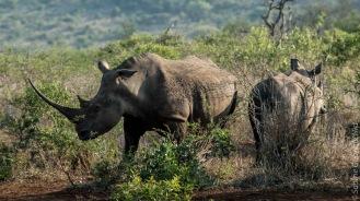 rhino (4 of 10)