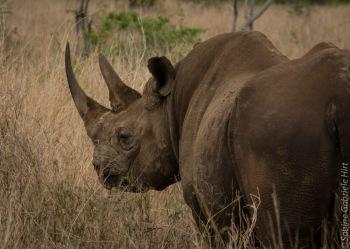 rhino (5 of 10)