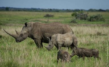 rhino (6 of 10)