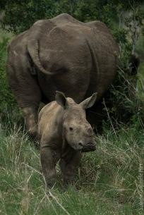 rhino (8 of 10)