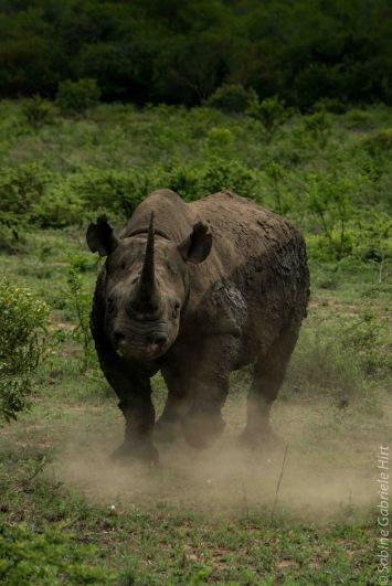 rhino (9 of 10)