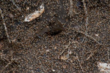 termites (1 of 1)