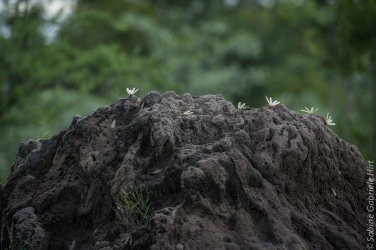 termites (2 of 2)
