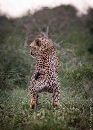 predators-1-of-36