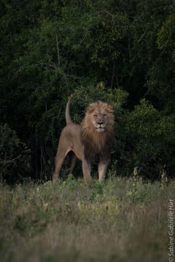 predators-15-of-36
