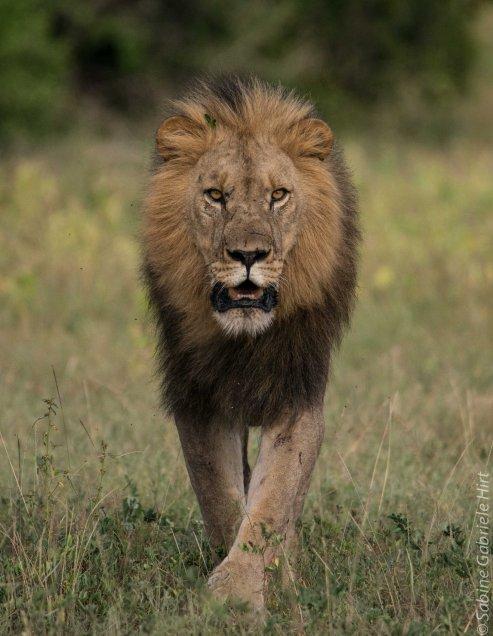 predators-16-of-36