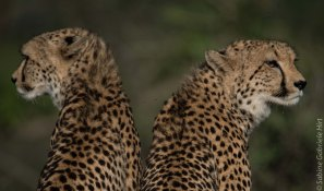 predators-3-of-36